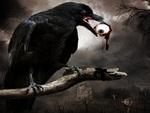 Eye and Raven