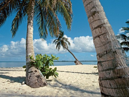 Relaxation - beach, sand, trees, beaches