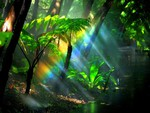Rainbow-Fern-Gully-Rainforest