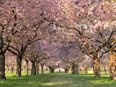 Beautiful Spring Other Nature Background Wallpapers On