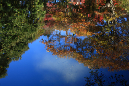 Reflections On Water - blue skies, water, reflection, trees