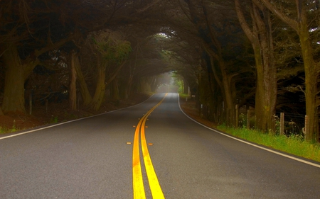 ALONG THE MISTY ROAD - mist, tunnel, fog, forest, trees, road, nature
