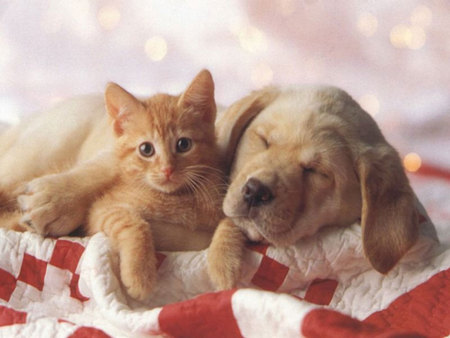 Cat And Dog Friends Wallpaper