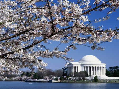 Untitled Wallpaper - jefferson memorial, washington dc, cherry blossoms