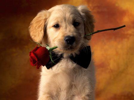 Puppy Love - beautiful, rose, puppy, picture, puppy love, dog, flower, love