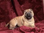 Someone please put some wrinkle cream on me