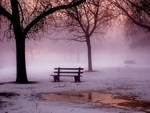 Bench in Misty Fog