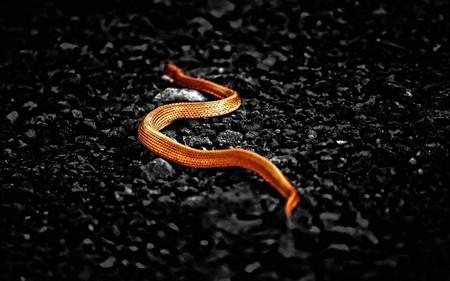 Orange snake - orange, reptil, snake, wild