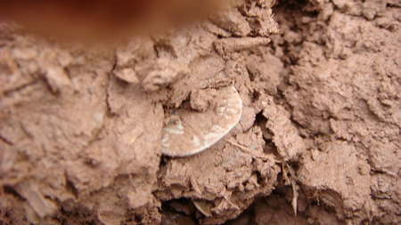 coin in the mud - king edward, mud, penny, silver, coin