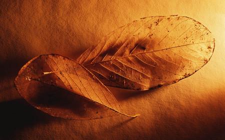 together - another leaf, warm, light, leaf, gold, macro