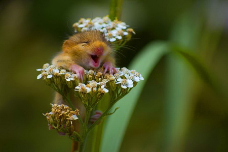 I LUV SPRING - mole, cute face, grass, flowers, spring