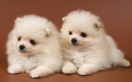 Adorable Dogs Dogs Animals Background Wallpapers On Desktop Nexus Image 605209