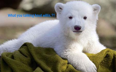Cute Polar Bear Bears Animals Background Wallpapers On Desktop