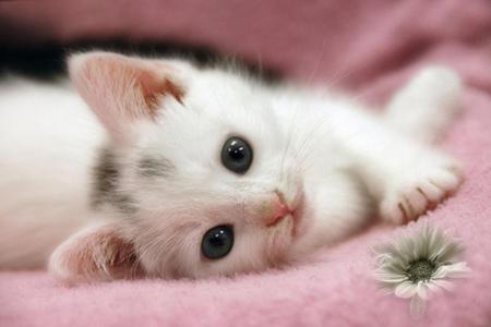 cute kitten cats animals background wallpapers on desktop nexus