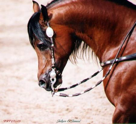 Western Horse - Horses & Animals Background Wallpapers on ...