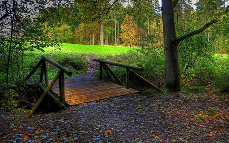 Bridge To The Forest - grass, peaceful, path, magic, forest, autumn, bridge, splendor, nature, trees, fall, woods, carpet, beauty, beautiful, lovely, wood, carpet of leaves, field, green, autumn colors, leaves