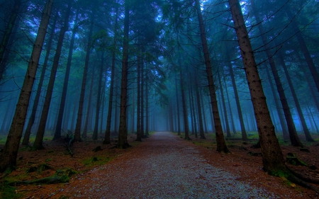 MYSTICAL FOREST PATH - avenue, trail, path, beautiful photos, forest, an evening, pathway, alley, road, trees, nature, tree