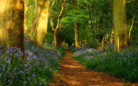 Path In The Forest - colorful, grass, sunlight, peaceful, other, tree, path, forest, plants, way, sunny, flowers, road, jungle, colors, wildflowers, splendor, nature, trees, woods, beauty, beautiful, lovely, trail, spring, pretty, green, wild, leaves