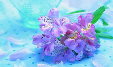 Light Blue Flowers Flowers Nature Background Wallpapers On