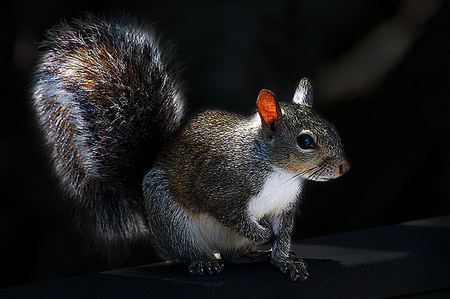 The cute squirrel squirrels animals background - Funny squirrel backgrounds ...