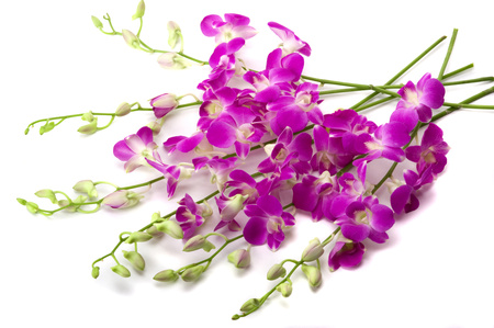 Orchids - flowers, photography, harmony, orchid, nice, elegantly, flower, bouquet, beautiful, cool, purple, photo, gentle