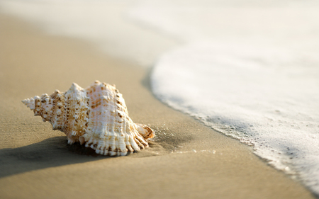 Secret of the shell - beach, water, shell, spoon, clear, nature, sea