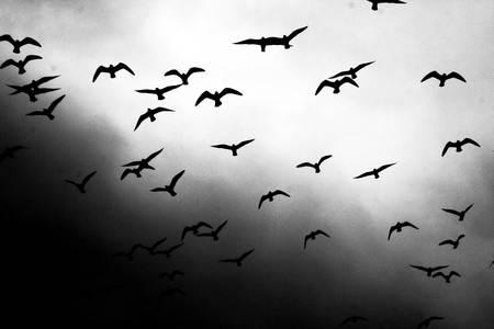Flight of birds - animals, birds, nature, sky