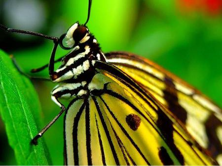 Butterfly - animal, butterfly, wings, leaves