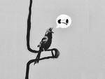 Banksy Woodpecker