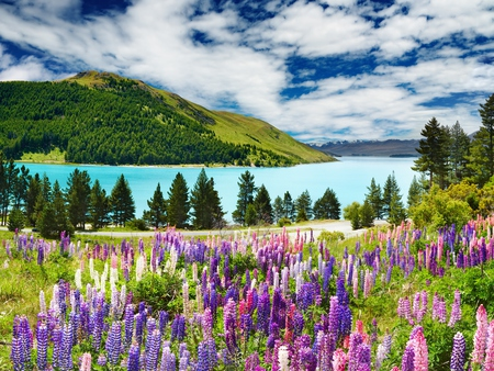 Landscape - beauty, day, colorful, flowers, picturesque, pretty, beautiful, trees, lake, nature, peaceful, daylight, view, grass, floral, colors, splendor, tree, lovely, love, ske, forest, spring, landscape, land, green, road, scenic, hill, water, lavender, clouds, flower, mountain, sky, mountains