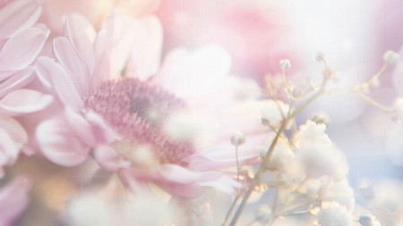 Pink so pale flowers nature background wallpapers on desktop pink so pale mightylinksfo