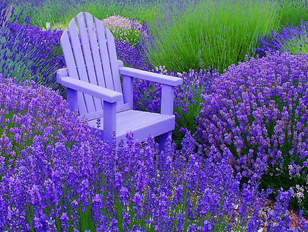 Lost in spring - purple, grass, flowers, bench, spring, lavender, blue chair fragrance, field