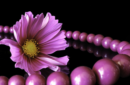 Andonia - photo, colorful, friend, andonia, beautiful, abstract, elegant, still life, photography, purple, friendship, love, flower, beauty, pearls, fancy