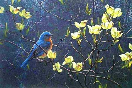 Blue birds n blooms - blue bird, blooms, branch, bird, yellow