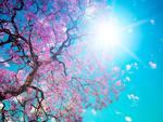 blossom tree in the summer