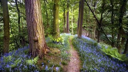 fantasy forest forests nature background wallpapers on desktop