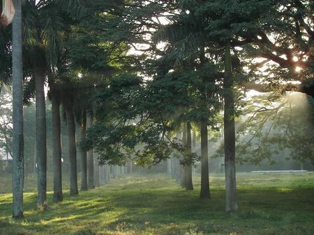 mysore sandal - Forests & Nature Background Wallpapers on Desktop