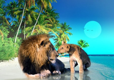 Beach Lions - image, background, father, afternoon, nice, multicolor, wallpaper, art, cub, moonlight, king, beautiful, seagulls, moon, leaves, sand, green, pup, beije, puppy, animals, lions, blue, night, male, female, maroon, mane, day, nature, desktop, reflected, branches, son, pc, oceans, yellow, beasts, shadows, evening, gulls, birds, trees, sky, abstract, palms, water, cool, beaches, awesome, photoshop, fullscreen, bay, colorful, brown, gray, trunks, sea, picture, hair, photography, mirror, amazing, photo, colors, leaf, wawes, plants, colours, reflections, natural