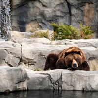 Bear's Life