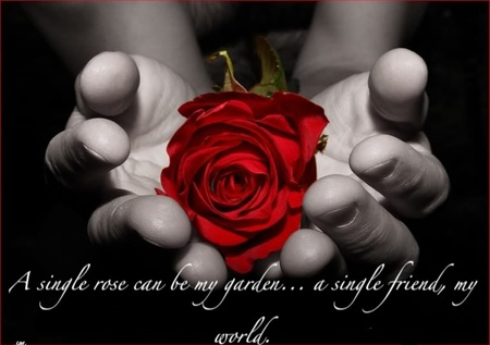 I love you my friends - hands, red rose, rose, friendship, love, flower, friends