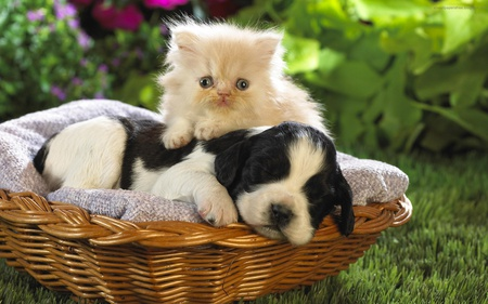 Cute Cat And A Puppy Cats Animals Background Wallpapers On
