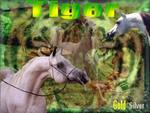 The Arabians