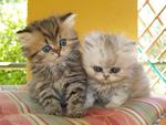 sweet kittens for me