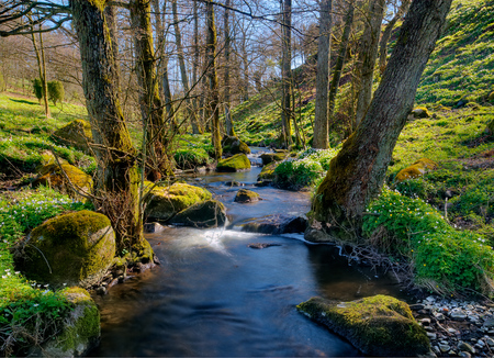 Spring forest - rocks, claustral, natyre, background, beautiful, spring, trees, water, green, beauty, hdr, river, forests, sesons, landscape, blue