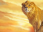 Beast Lion King Of Beasts !!!