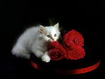 Kitty And Roses