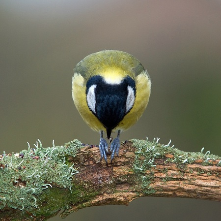 Let us pray - beautiful, pray, bird, cute