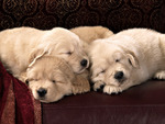 Sweet babies on sofa