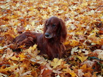 Dog on autumn field