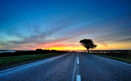 SUNSET DRIVE - sky, night, sunset, trees, road, tree